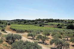 Pézenas : Mediterranean charm