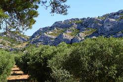 Les Alpilles, in the midst of Cézanne's landscapes