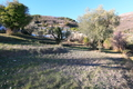 terrain TOURRETTES-SUR-LOUP 1512560_1