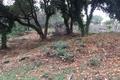 terrain MANDELIEU-LA-NAPOULE 1524509_3