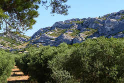 Les Alpilles, in the midst of Cézanne's landscapes