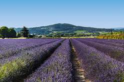Luberon : majesty at the heart of Provence