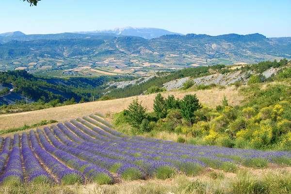 Drôme Provençale : charm and hospitality - Theme_2337_1.0