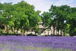 Drôme Provençale : charme et hosp... - Theme_2337_2.jpg