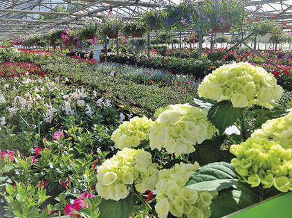 Appy nursery, 34.58 acres of greenery !