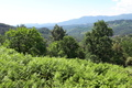 terrain LES VANS 1609560_3
