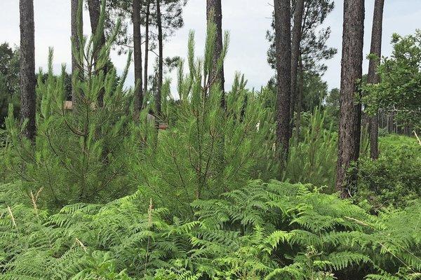 ONESSE-ET-LAHARIE - Annonce terrain à vendre - 500 m²